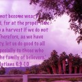 Don't become weary; work hard to see the Harvest
